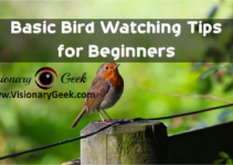 Basic Bird Watching Tips for Beginners