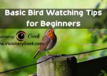 Basic Bird Watching Tips for Beginners